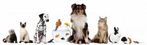 Fondation-HVE-chien-chat-965x300