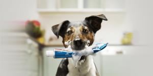 No-Toothpaste2