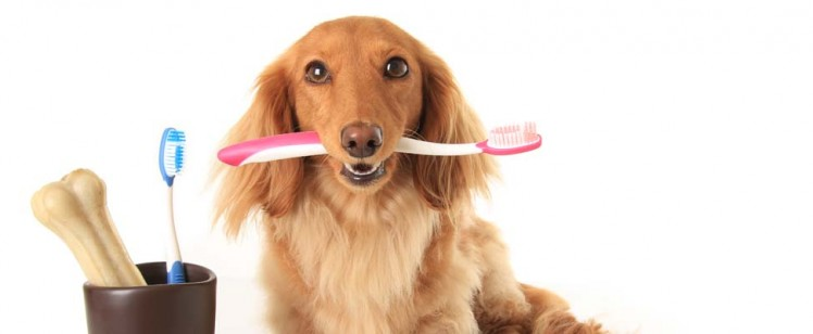 The-Best-Dog-Toothbrush-for-Dogs